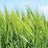 Business Software Solutions ERP & CRM & WMS & BI for Agriculture